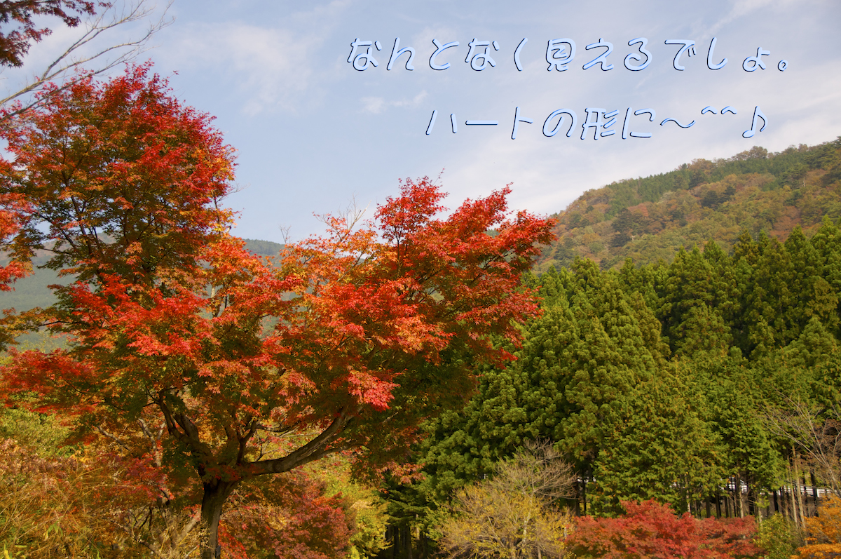 http://www.ribonsky.jp/blog/DSC_0774.jpg